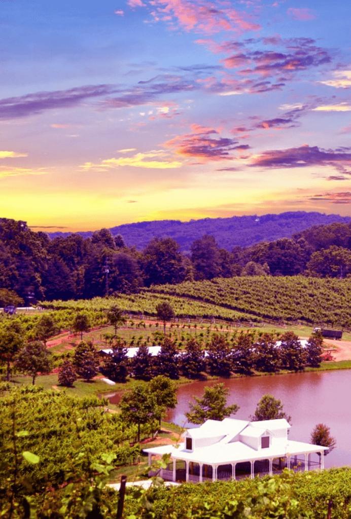 Napa valley vinyard and pond at sunset